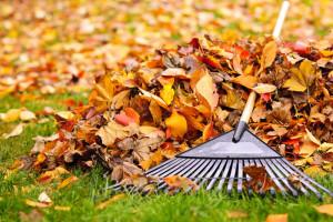 hewlynn_home_garden_spring_cleanup