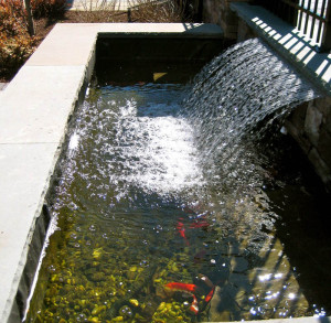 long-island-pond-fish1