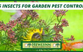 5 INSECTS FOR GARDEN PEST CONTROL (6)