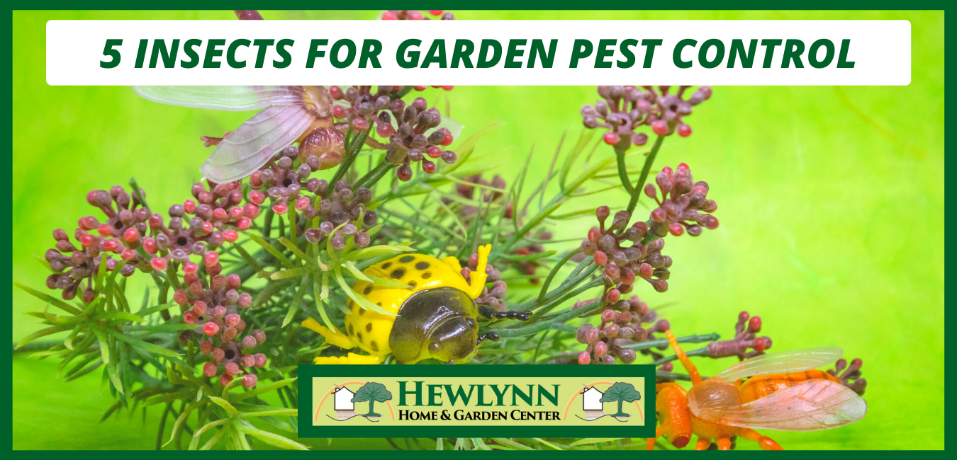 5 INSECTS FOR GARDEN PEST CONTROL