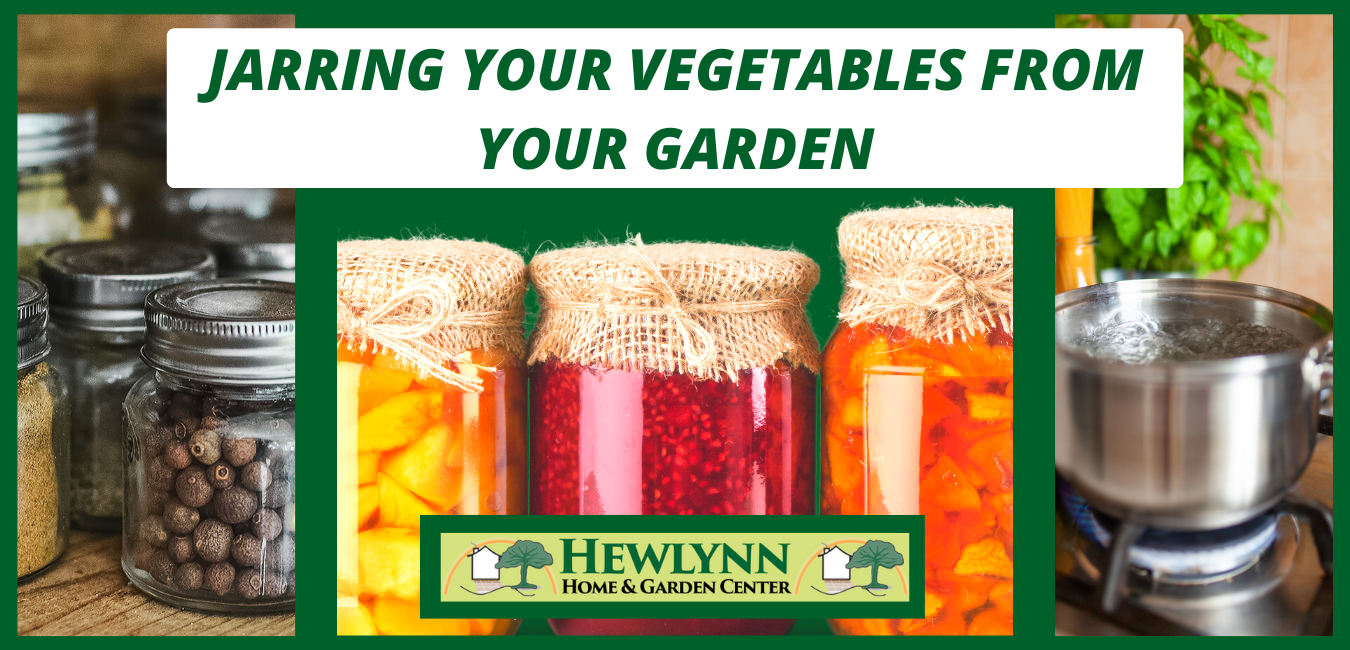 JARRING YOUR VEGETABLES FROM YOUR GARDEN
