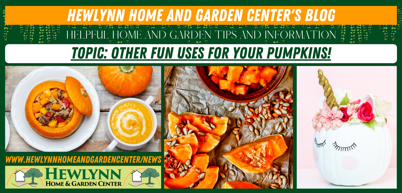 Read more about the article Other Fun Uses for Your Pumpkins!